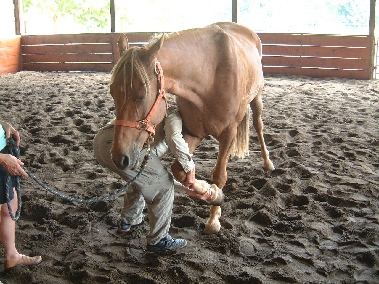 HORSE   Somatics